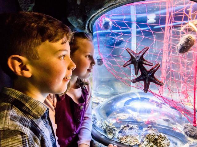 2 children watching 2 starfish in a tank