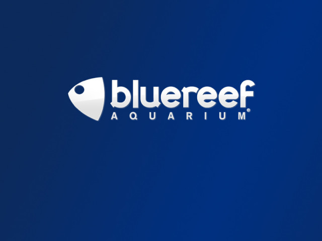 Only £6.15 and Carer Goes Free - Blue Reef Aquarium