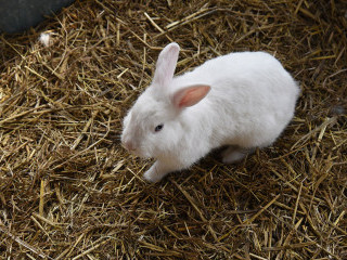 Middle Farm Bunny